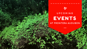 Upcoming Events at Frontera Audubon!
