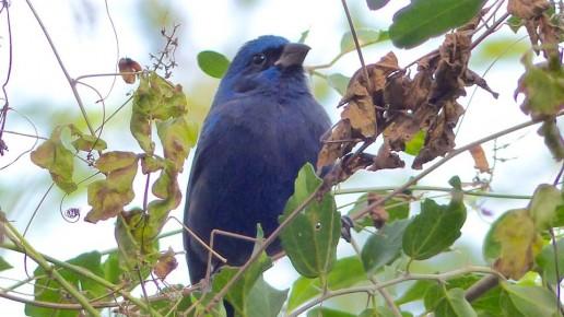 Rare Birds at Frontera Audubon